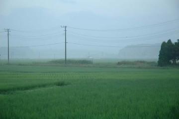 今朝の島地区 霧が出て、向こうが海のように見えます 今日は晴れそうです