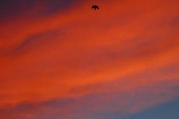 ↑ クリックで拡大します 7/29日早朝の朝焼け 出勤する鳥が急いでいます 朝からの天気の崩れを表しているのか、きれいな色に染まっています