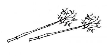 近所で竹を切ってきます。かっこ良く形を整えて、全長4300ミリ程、2セット
