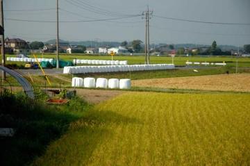 減反の一環のようですが、これでも米は余ってしまうのでしょうか?みんなは何を食べているのだろう?