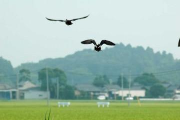 しかも、それぞれ別々の方向です。危険の分散を計っているのでしょうか。羽のエルロン部分の紺色がキレイです。