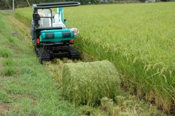 コンバインが生み出す稲のロールを捕まえて倒してラップでぐるぐるまきです。