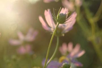 季節感という意味では、植物のほうが遥かにセンシティブですね。