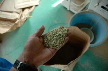 不合格の米。これもセンベイなどの材料に売れるそうです。あとから出てしまった穂からとれた米などで粒が小さく、未熟米ということだそうです。