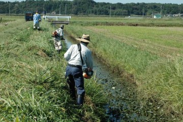 水路の法面の草刈りを行いました。暑い盛りに比べて少し草の勢いが弱くなっているのを感じます。