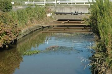 排水機場の上流部分。若干流れてきたヒシなどが見えます。