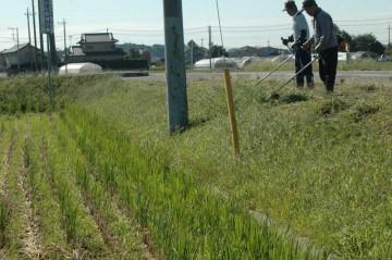 農地の法面の草刈りを行いました。