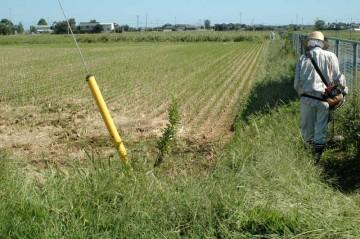 田んぼの畔なども草刈りをします。