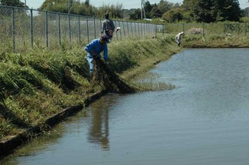 調整池の中に入り込んでいる草も除草します。網を引き上げているみたいです。