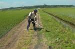 10:草刈り