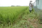 12:さらに草刈り