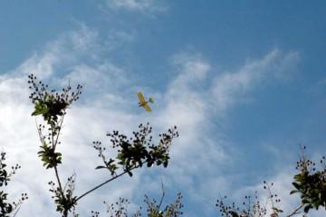 この日は穏やかで天気が良く、ウルトラライトプレーンが上空を飛んでいました。