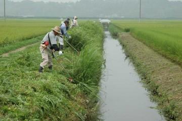 8月10日環境保全会活動の草刈りの一コマ。この時点で、前出の場所にはヒシが大量発生していたわけですが、用水に変わったところはありません。