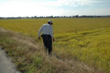 農用地の法面の点検