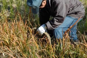 凍結防止のため田んぼに水を配る蛇口のバルブを開けて回ります。
