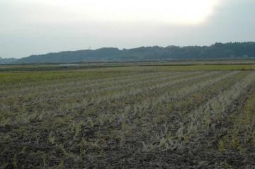 稲刈の終わった田んぼもうすぐ12月。