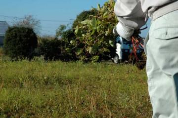 蕎麦の収穫の写真。