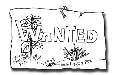 wantedの画
