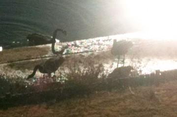エサを投げると岸に上がって、食べたそうです。かわいいですね。同じく写真提供ご近所さん。