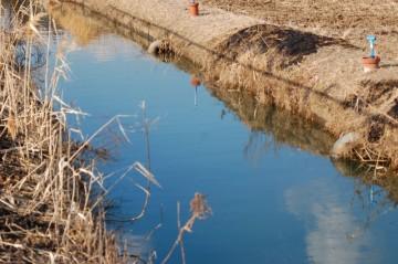 ホテイアオイで埋め尽くされていた水路ですが、きれいさっぱりなくなっていました。