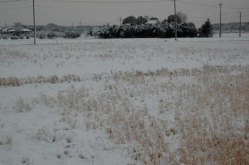 このあたりとしては珍しく雪も何回か積もったし、もちろん霜も降りています。