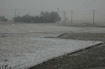 そして昨日。ボーボーの雪で、朝からの雨が雪に変わったのにも関わらず、こんなに積もるなんてビックリです。