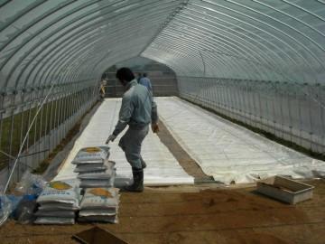 苗床を並べ終わったら保温シートをかける。