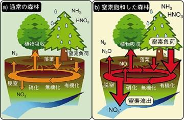 ここでもアンモニア(NH3 )硝酸(HNO3)の形で落ちてくるように書いてあるなあ