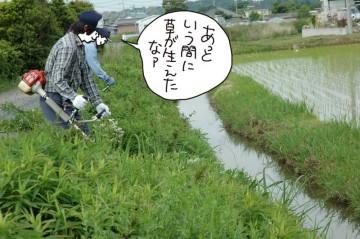 用水路、法面の草刈り。ボーボーです。