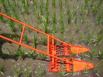 田んぼの草取りの写真