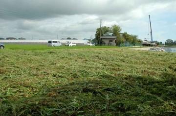 すっかりなぎ倒された草地。見晴らしが良くなりました。