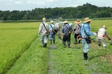西の部隊と東の部隊が北面で合流し、結構過密な草刈り機関車となって農道を一直線に刈って行きます。