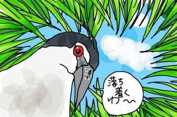 ゴイサギが稲のスキマから空を見上げています