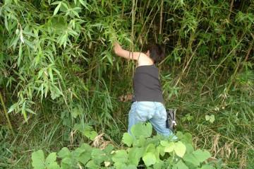 竹を切り出します