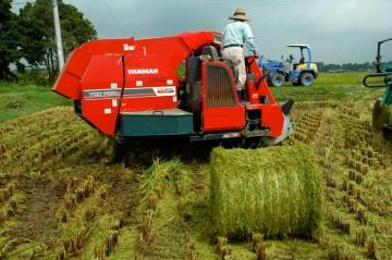 ヤンマーYWH1400A このような稲のカタマリを作り上げます。最新型はYWH1500という型番になっているようです。