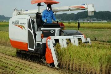 クボタコンバインER108でコシヒカリの稲刈りが始まりました。