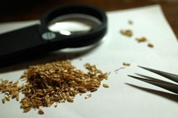籾殻はバラバラで形をとどめていないのが多いなあ