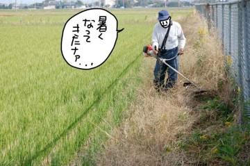 農地の法面の除草 こういう草は引っかかって刈りにくいです