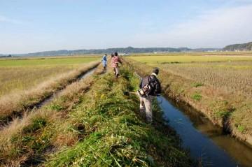 水路の草刈り 少し枯れかけているのか、そんな草はいつもより力がいります。