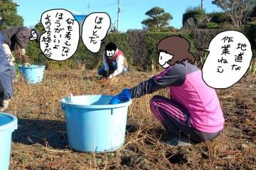 刈ったそばをしごいて種だけをバケツに入れます。目先の作業だけに集中する地道な作業が続きます。