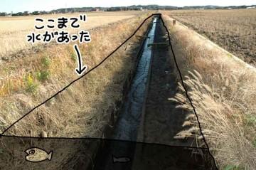 田んぼに水を送っていた頃はここまで水がありました。メダカも捕まえたのに、こんなに水が少なくなっちゃって、今、メダカはどうしているのでしょう?