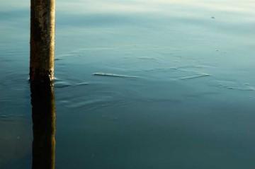 早朝の涸沼川の川面。川なのに薄い氷がプカプカ浮いて流れています。