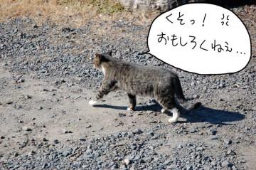名残惜しそうに木の近くまで行き、とぼとぼと帰っていくトラ猫。