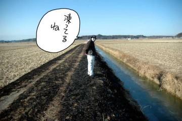 一通り農地を見て回ります。用水路、凍ってます。