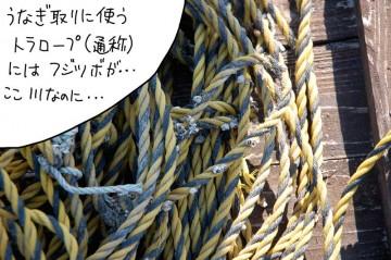 ウナギとりの仕掛けを結ぶ通称トラロープにもフジツボが・・・ずいぶん塩水が来ているんですねえ・・・