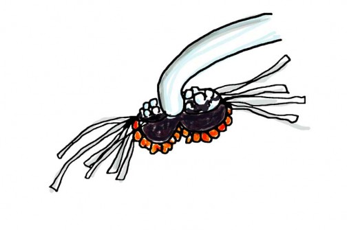 茨城県水戸市大場町・島地区農地・水・環境保全会便り 農地・水保全管理支払い交付金 植物調べ ヒメオドリコソウの雌しべ?雄しべ?