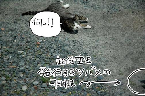 ネコへのツバメの攻撃