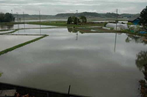 昨日は栃木でたくさん雨が降ったらしく、本当は2枚の田んぼがつながっちゃってます