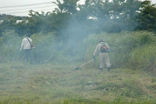 立ちこめる猛烈な2ストロークの排気の中、草の壁に突進しています。