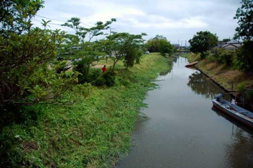 ジャングルだった石川川の河口付近もこんなにきれいになりました